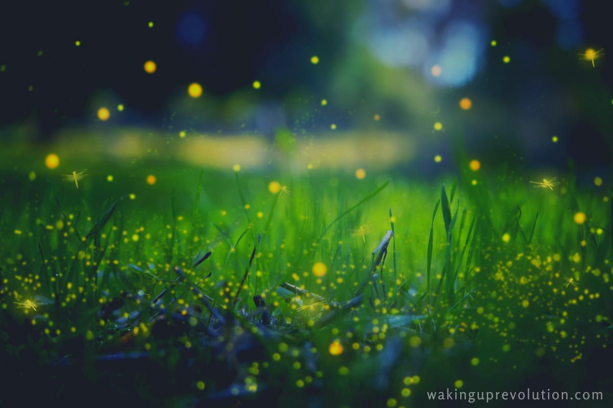 Instead of fireworks, we will watch fireflies.